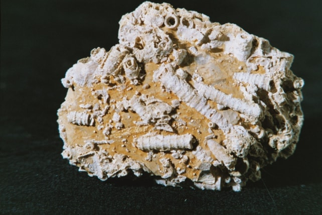 Image-Fossile-2