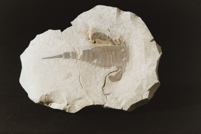 Image-Fossile-3