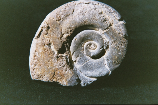 Image-Fossile-4