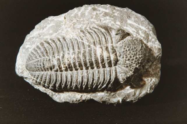 Image-Fossile-5